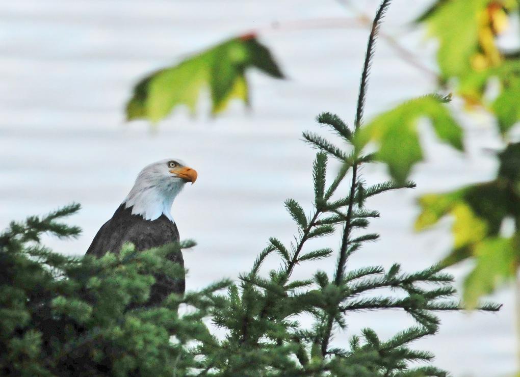 eagle 062412