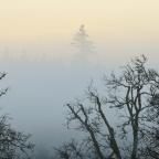 SNAPSHOT: Foggy valley