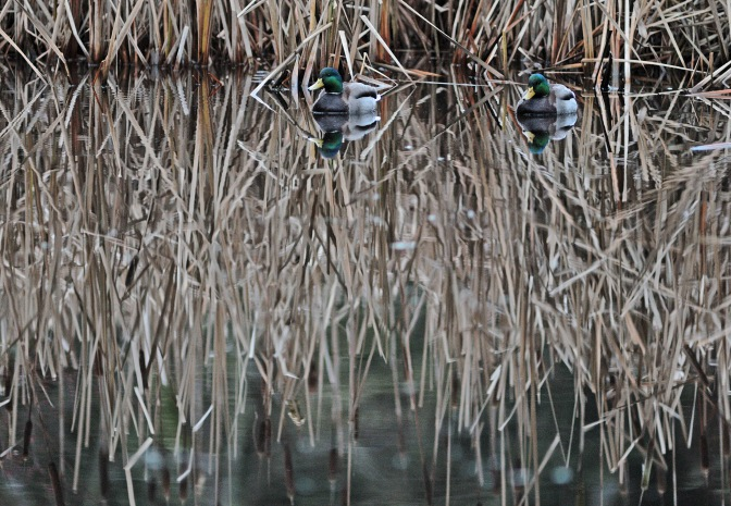 SNAPSHOT: Duck blind