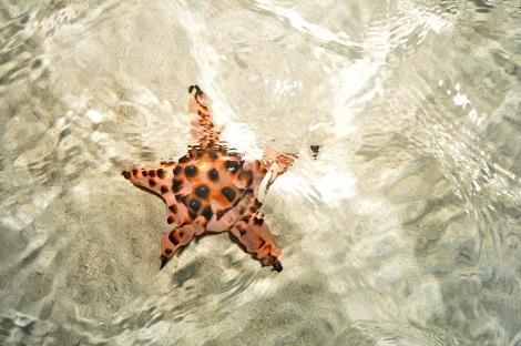 RP sandbarstar#3 022313