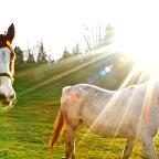 SNAPSHOT: Picturesque pastures