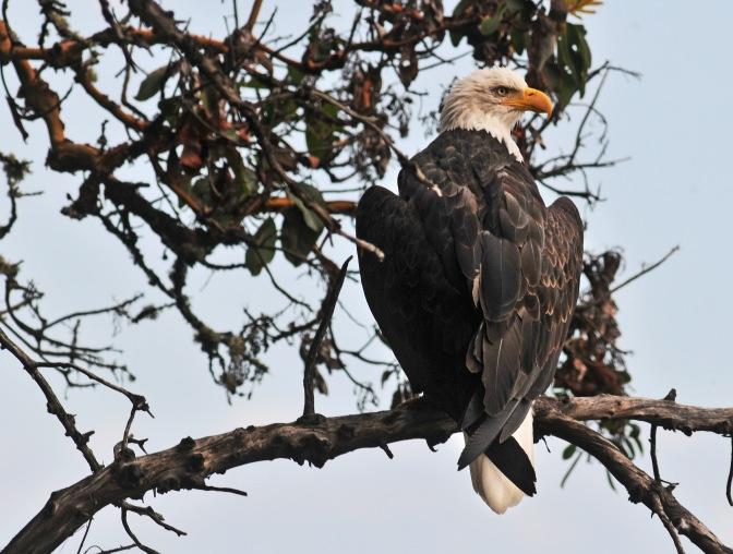 eagle#3 090213