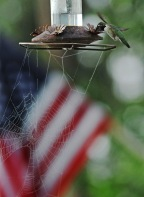 Snapshot: Patriotic Feeder