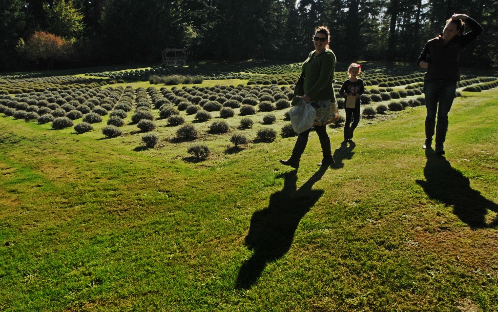 Guests at Blue Willow Lavender Farm walking on the farm's manicured fields.
