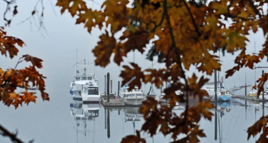 marina fog #1