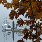 Picture perfect Fog in Lakebay