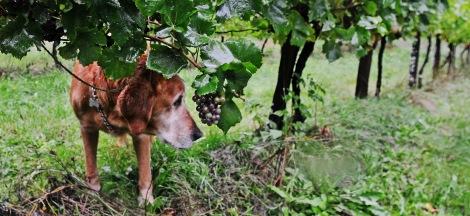 trillium dog blog