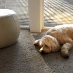 Dog Tired in Longbranch