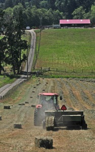 Kaukiki Farm bales their hay in the summer to help feed their sheep through the winter.