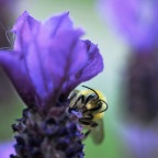 Bees buzz, wasps sting in Longbranch