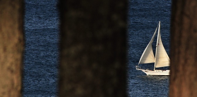 sail through trees 071914