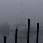 Fog May Stick Around in Longbranch for Most of the Day