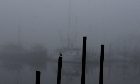 It was all quiet at the Lakebay Marina  as fog blanketed Mayo Cove early Monday morning.