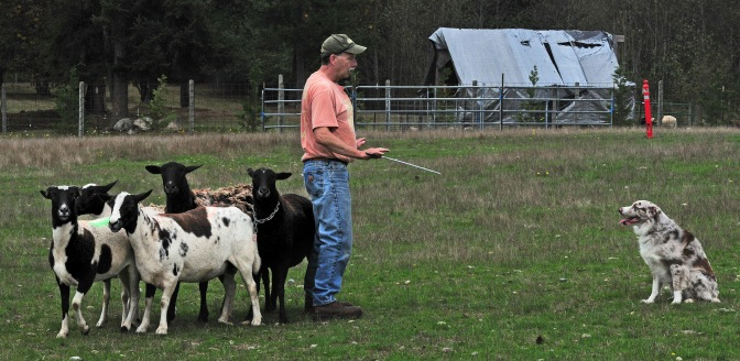 Nole West, of Everett, works with his 3-year-old Australian shepherd Fred on a field at PackLeader Farm.