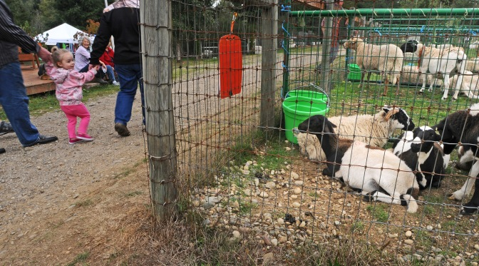 Children and adults alike enjoyed the petting pens at PackLeader Farm.