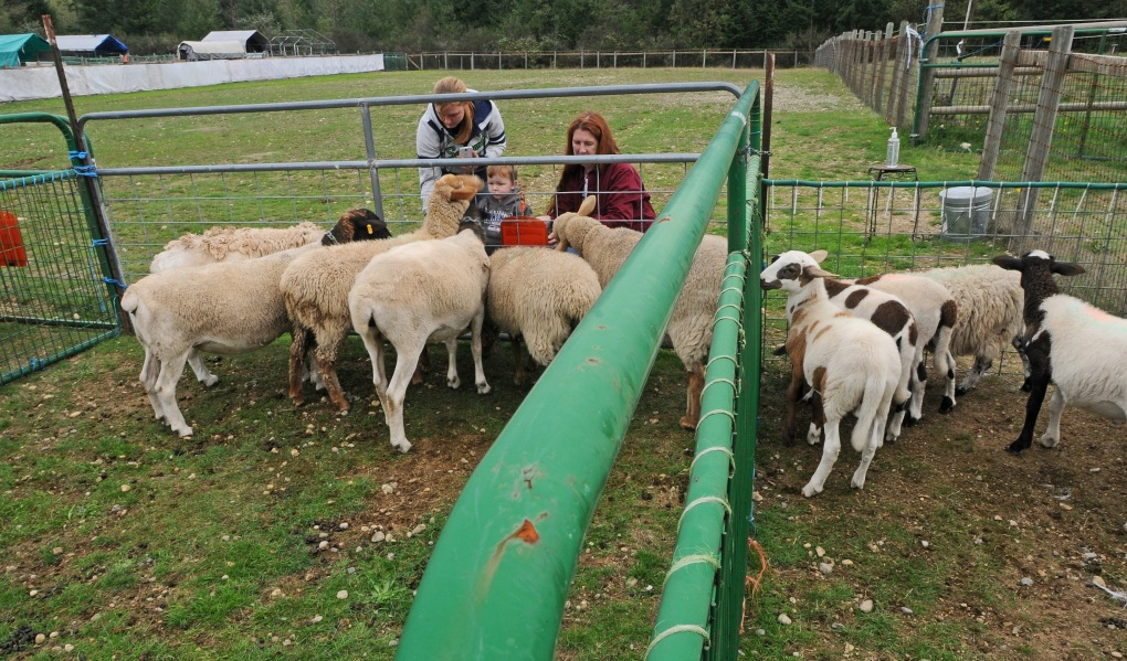 Kayley Bruderer, left, and her 2-year-old son Isaac feed the sheep in the petting pens at PackLeader Farm. Kristine Morley, a cattle dog owner, helped mother and son coax the animals to come closer.