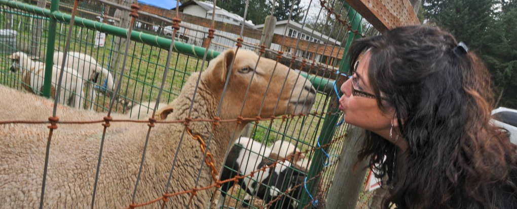 My lovely brdie goes nose-to-nose with Thelma in the petting pens at PackLeader Farm.