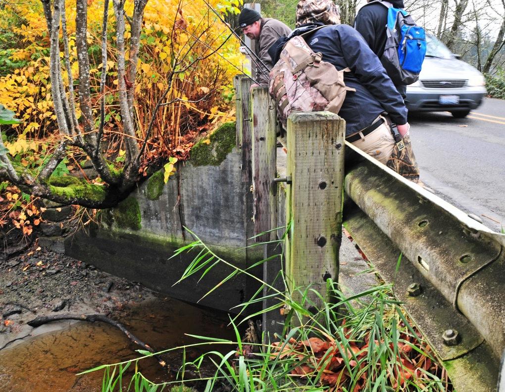 Anglers check Minter Creek along Creviston Road for Chum salmon early Saturday morning.