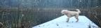 Longbranch: Let it snow, let it snow, let it snow