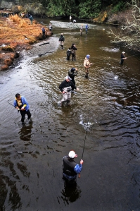 Anglers stood should-to-shoulder on Minter Creek during the winter Chum salmon run in December 2011.