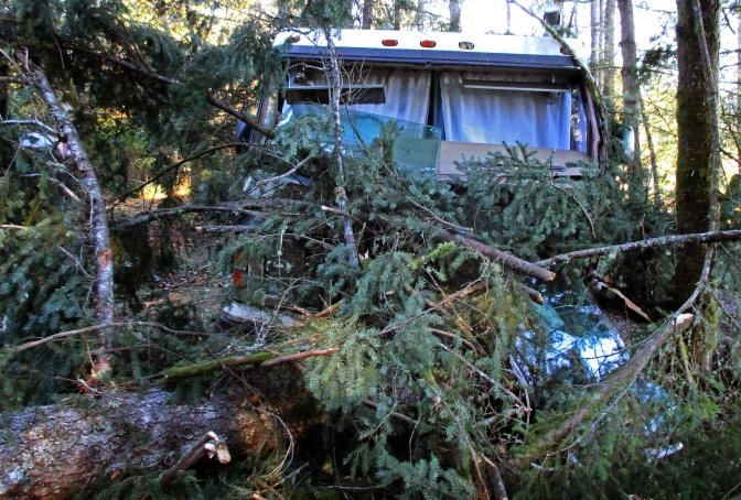 Jon Goods' motor home in Wauna after a Douglas fir fell on it during a wind storm Tuesday. Photo courtesy of Jon Goods