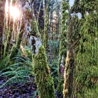 SNAPSHOT: Sunshine through the trees in Longbranch