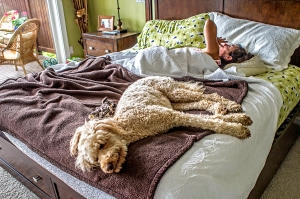 My lovely bride and the goofy goldendoodle sleeping in on a cool Sunday morning.