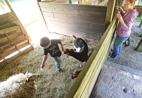 Pierson Fowler, 7, said he loves feeding the animals when he gets home from school. Pierson offers their sheep Marshmallow a slice of apple while his mother Marykate Fowler watches.