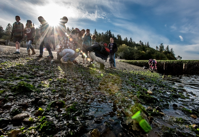 Students, parents and teachers combed the tide pools of a beach on Case Inlet searching for marine life.