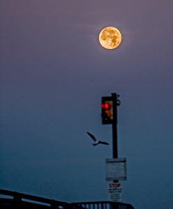 beaver moon 3