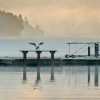 Frigid, Foggy Morning in Longbranch