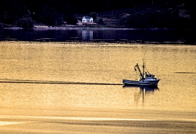A fishing boat makes its way down Drayton's Passage near Longbranch, Washington, early Thursday morning July 16, 2015, while the sun paints the water gold. The old warden's cottage on McNeil Island is in the background.