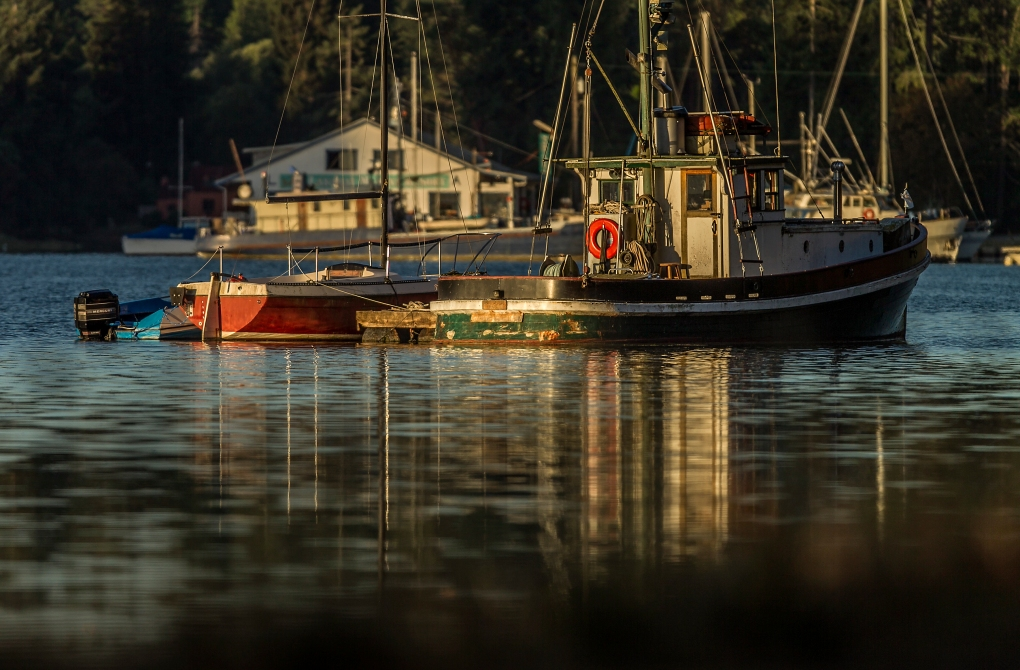 Boats on a hook on Mayo Cove at sunrise in Lakebay, Washington, Saturday Aug. 1, 2015.
