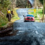 Horse and big red ram share road in Longbranch