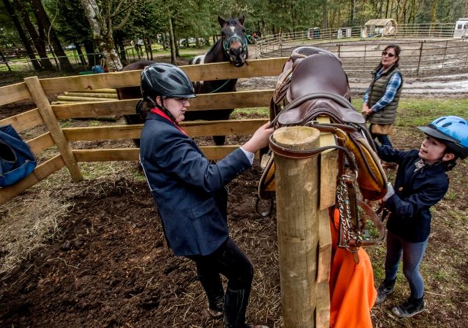horse show 3