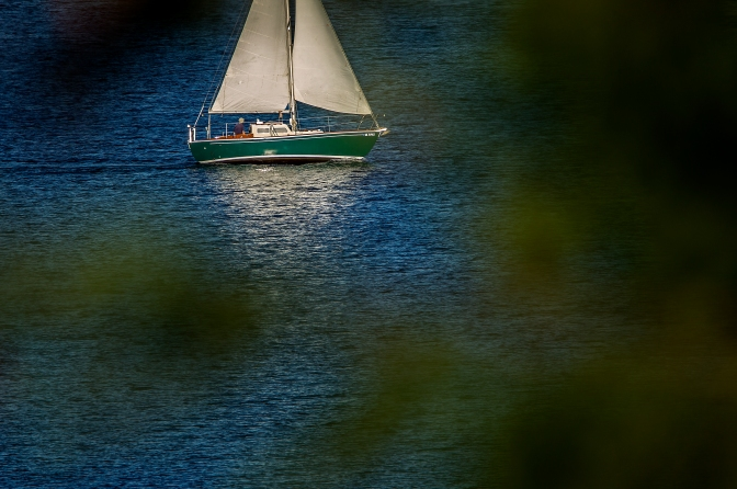 sail_through the trees