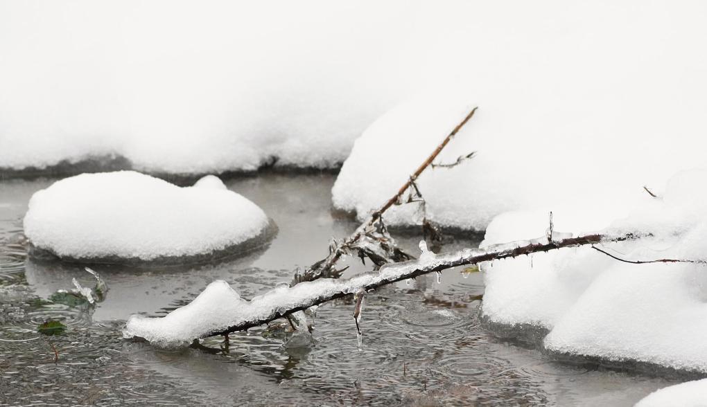 january snow005