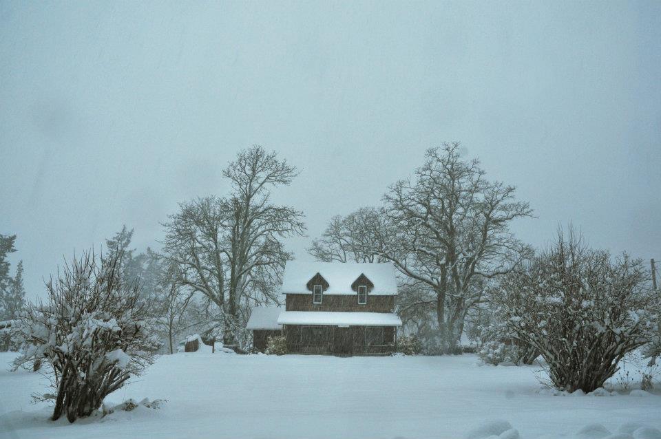 january snow008